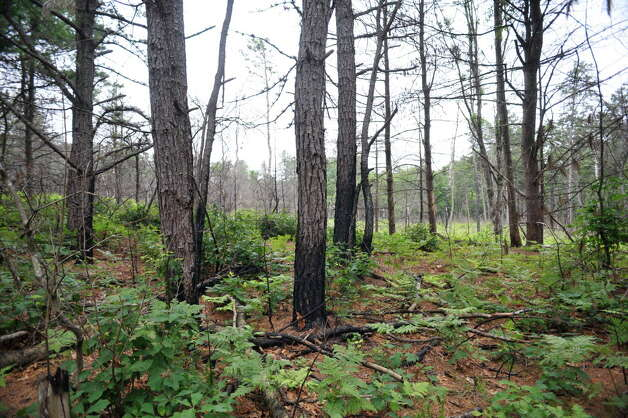 A view of an area of the Albany Pine Bush Preserve on Tuesday, July 7, 2015, in Albany, N.Y.  This area of the preserve went through a  prescribed fire in 2014.     (Paul Buckowski / Times Union) Photo: PAUL BUCKOWSKI / 00032132A