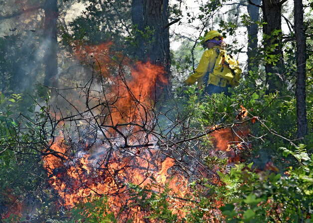 Forest Ranger Mary Gross lays down a line fire Thursday afternoon in the Pine Bush Preserve Thursday afternoon July 16, 2015,  to burn off old vegetation to make way for new plants for the endangered Karner Blue butterfly feed and thrive on in Albany, N.Y.       (Skip Dickstein/Times Union) Photo: SKIP DICKSTEIN