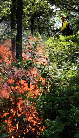 A Forest Ranger lays down a line fire Thursday afternoon in the Pine Bush Preserve Thursday afternoon July 16, 2015,  to burn off old vegetation to make way for new plants for the endangered Karner Blue butterfly feed and thrive on in Albany, N.Y.       (Skip Dickstein/Times Union) Photo: SKIP DICKSTEIN