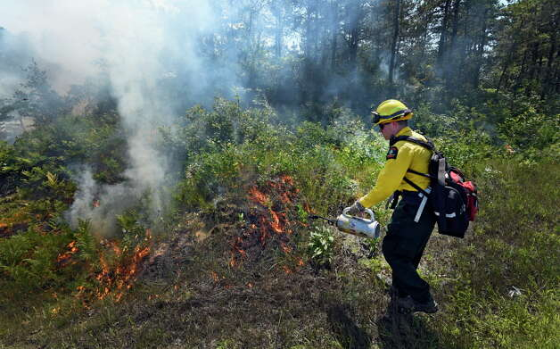 Forest Ranger Jason Seeley lays down a line fire Thursday afternoon in the Pine Bush Preserve Thursday afternoon July 16, 2015,  to burn off old vegetation to make way for new plants for the endangered Karner Blue butterfly feed and thrive on in Albany, N.Y.       (Skip Dickstein/Times Union) Photo: SKIP DICKSTEIN