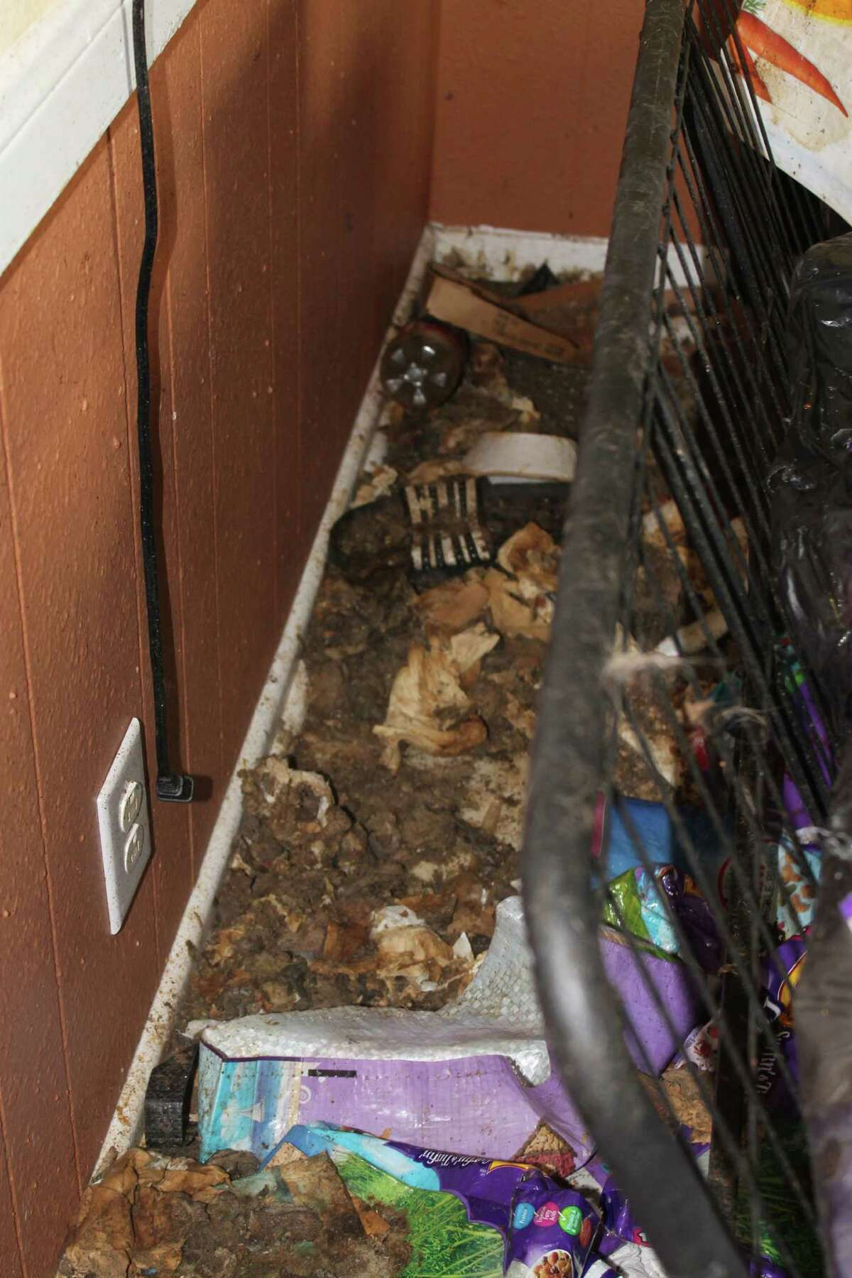 Animal Care Services investigators removed 57 cats from a home on the Northeast Side on Nov. 5 after finding unsanitary conditions inside, according to ACS spokeswoman Lisa Norwood.
