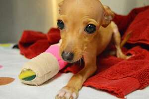 Houston SPCA shares cutest/saddest looking dog photo ever - Photo