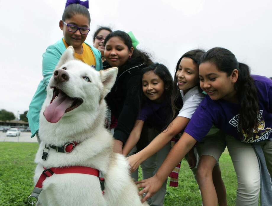 Fourth-graders from Graebner Elementary School stroke a dog's coat during a visit to the Humane Society for career day. Photo: Photos By Bob Owen /San Antonio Express-News / San Antonio Express-News