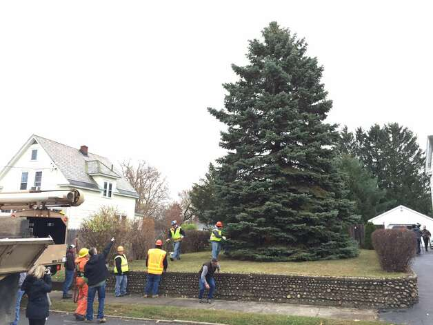 State workers prepare to cut down the tree that will be installed on the Empire State Plaza in Albany for the holiday season. The tree will be lit on Dec. 6. (Skip Dickstein / Times Union)