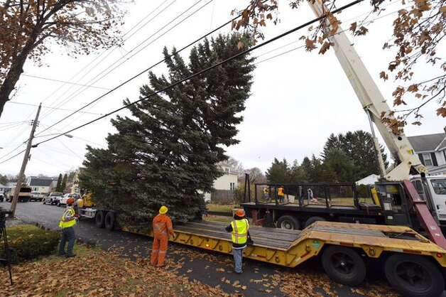 State workers cut down a spruce in the yard of a Rotterdam couple on Thursday and plan to install the tree at the Empire State Plaza in Albany for the holiday season. The tree will be lit on Dec. 6. (Skip Dickstein / Times Union)