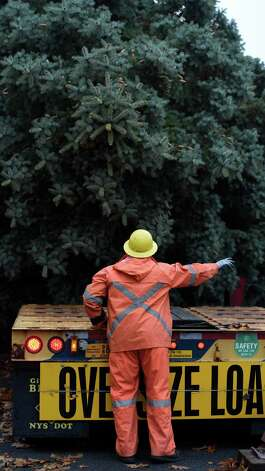 NYS OGS worker Richard Kaser guides the blue spruce that Evelyn and Philip Parks donated to the State to the flat bed trailer that will transport it to The Empire State Plaza Nov. 12, 2015 from it's rooting in Rotterdam, N.Y.  The stately tree which they donated  to the State of New York will be placed at the Empire State Plaza as the state's Holiday tree.  (Skip Dickstein/Times Union) Photo: SKIP DICKSTEIN / 00034212A