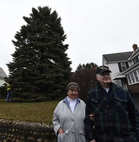 Evelyn and Philip Parks stand in front of the blue spruce that they donated, Nov. 12, 2015 from the front lawn of their home in Rotterdam, N.Y.  The stately tree which they donated  to the State of New York will be placed at the Empire State Plaza as the state's Holiday tree.  (Skip Dickstein/Times Union) Photo: ALBANY TIMES UNION