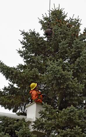 NYS OGS worker Richard Kaser guides the crane hook to the blue spruce that Evelyn and Philip Parks donated to the State Nov. 12, 2015 in Rotterdam, N.Y.  The stately tree which they donated  to the State of New York will be placed at the Empire State Plaza as the state's Holiday tree.  (Skip Dickstein/Times Union) Photo: ALBANY TIMES UNION