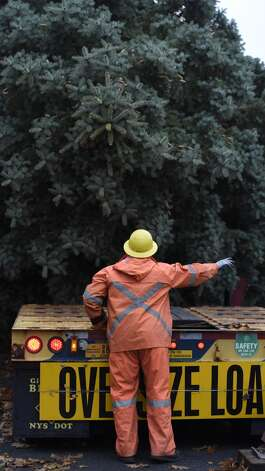 NYS OGS worker Richard Kaser guides the blue spruce that Evelyn and Philip Parks donated to the State to the flat bed trailer that will transport it to The Empire State Plaza Nov. 12, 2015 from it's rooting in Rotterdam, N.Y.  The stately tree which they donated  to the State of New York will be placed at the Empire State Plaza as the state's Holiday tree.  (Skip Dickstein/Times Union) Photo: ALBANY TIMES UNION