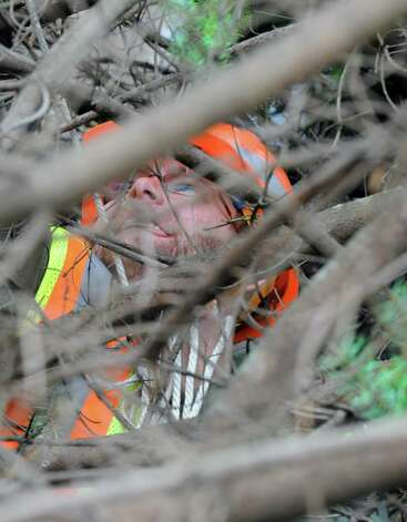 Michael Stone works on attaching guide ropes inside the tree branches as OGS and DOT crews put up the state holiday tree in the east park of the Capitol on Friday Nov.13, 2015 in Albany, N.Y. (Michael P. Farrell/Times Union) Photo: Michael P. Farrell / 00034229A