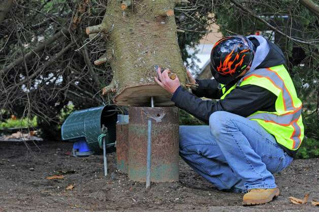 OGS's Jeremy Jasper aligns the tree's base as OGS and DOT crews put up the state holiday tree in the east park of the Capitol on Friday Nov.13, 2015 in Albany, N.Y. (Michael P. Farrell/Times Union) Photo: Michael P. Farrell / 00034229A
