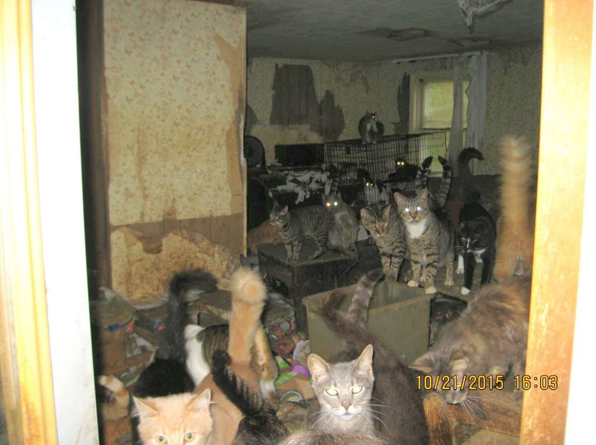 A photo of a house in Westerlo where cats were being hoarded, October, 26, 2015. (Courtesy of Albany County Sheriff's Department.)