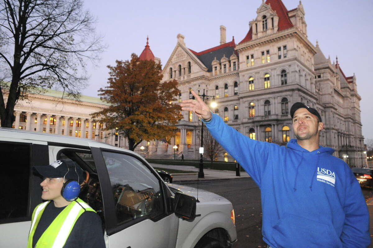 USDA biologist Bryan Haslun, right, and wildlife specialist Angela Kolewe disperse crows from the buildings around the Capitol on Wednesday Nov. 12, 2014 in Albany, N.Y. (Michael P. Farrell/Times Union)