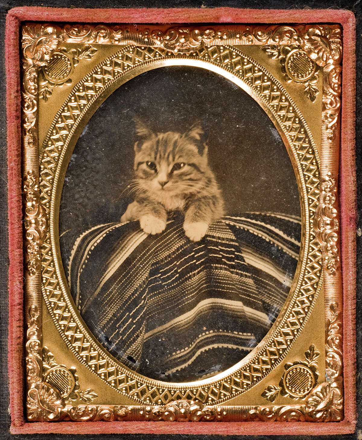 Cat posed with Mexican serape, circa 1866