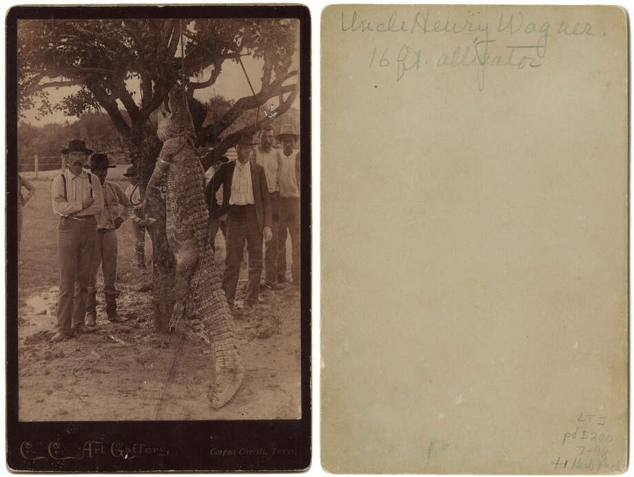 Men with 16-foot alligator hanging from tree, 1890. Photo: DeGolyer Library,  Southern Methodist University