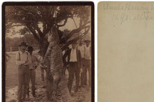 Men with 16-foot alligator hanging from tree, 1890