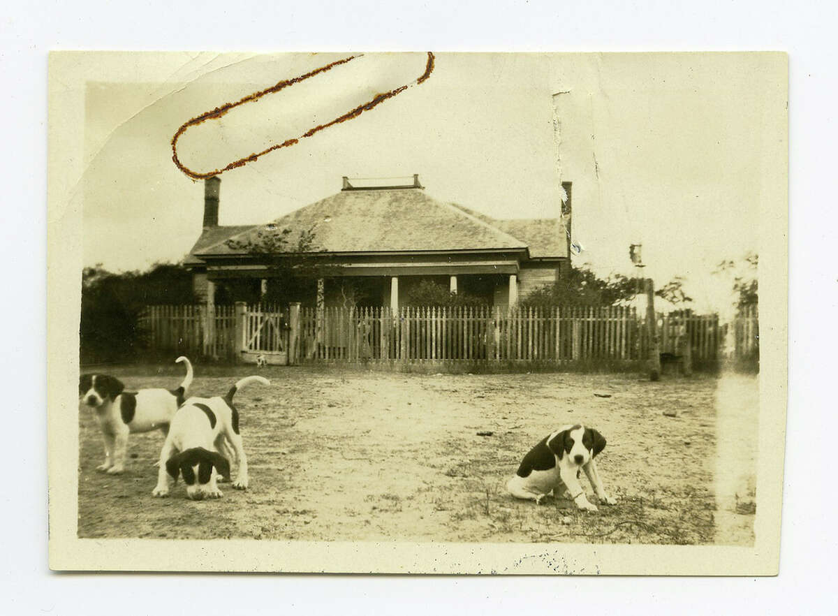 3 puppies in front of the J.T. Young Home, unknown date