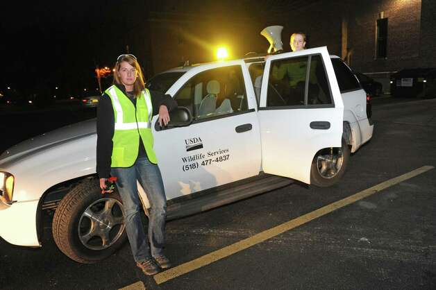 Wildlife specialist Kendra Trammel, left, and wildlife biologist Angela Kolewe keep the crows on the run Wednesday Nov.18, 2015 in Albany, N.Y.  Wildlife biologists will be conducting a non-lethal dispersal of fall and winter roosts of American Crows that typically gather in Albany this time of year. The City of Albany requested assistance to scatter the crows because of their droppings and the ruckus they create. The non-lethal dispersal will be conducted by wildlife biologists from the Animal and Plant Health Inspection Service, Wildlife Services, part of the U.S. Department of Agriculture. They will be driving marked vehicles and wearing uniforms and yellow safety vests marked USDA Wildlife Services. The work will be repeated at two-week intervals throughout winter where roosts develop. (Michael P. Farrell/Times Union) Photo: Michael P. Farrell / 10034305A