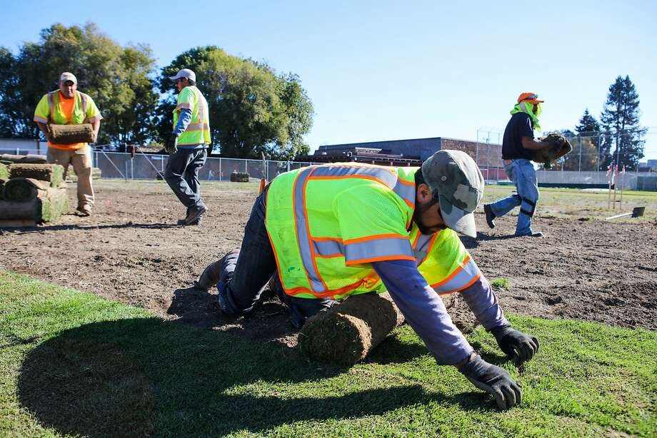 Jonathan Garcia (left), Efren Martinez, Ramaro Pena and Luis Arteaga lay sod at Oakland International High School. Photo: Gabrielle Lurie, Special To The Chronicle