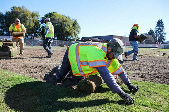 (l-r) Jonathan Garcia, Efren Martinez, Ramaro Pena and Luis Arteaga lay sod on a baseball field at Oakland International High School, in Oakland, California, on Thursday, November 19, 2015. The renovation is part of a bond construction site, which is overseen by interim facilities director Lance Jackson.
