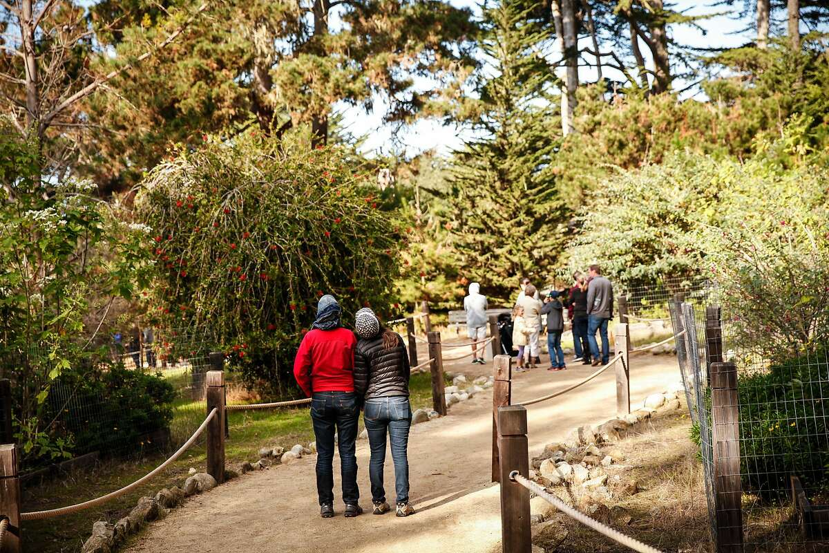 Visitors to the Pacific Grove Monarch Sanctuary crane their necks upward to see the masses of butterflies in the tops of the trees in Pacific Grove, Calif., Saturday, November 14, 2015.