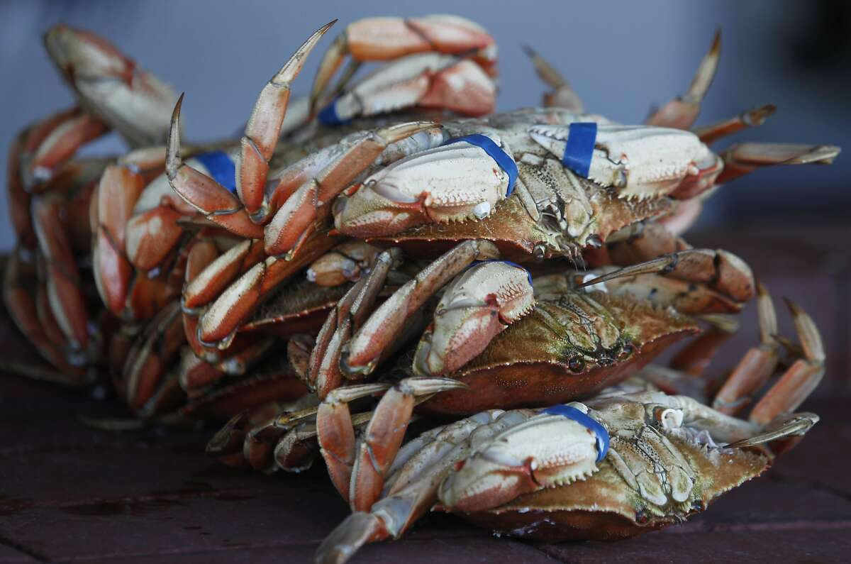 Fresh Dungeness crab imported from Washington state is sold at Fishermen's Grotto restaurant on Fishermans Wharf in San Francisco, Calif. on Friday, Nov. 20, 2015. Recent tests indicate that domoic acid in Dungeness crab have dropped to acceptable levels but it will still take a little while longer to lift the ban on the local crabbing season.