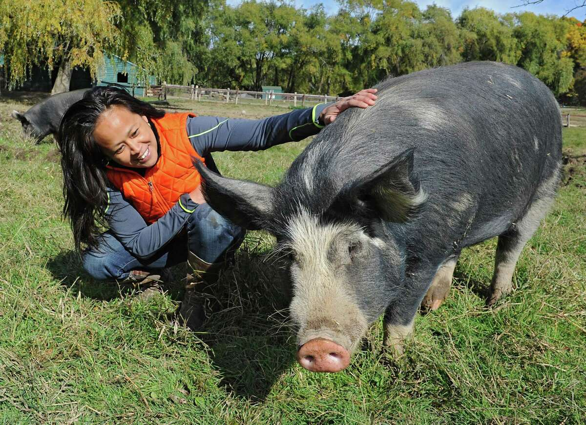 Outreach Manager Michelle Alvarez spends some time with Mario the pig at Catskill Animal Sanctuary on Sunday, Oct. 18, 2015 in Saugerties, N.Y. Mario and Audrey, in background at left, were brought to the sanctuary by Bob Comis who is featured in an upcoming full-length documentary,