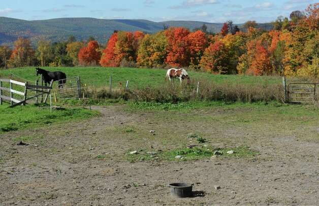 "A couple of horses graze at Bob Comis' InLine Farm on Thursday, Oct. 15, 2015 in Schoharie, N.Y. Comis is featured in an upcoming full-length documentary, ""The Last Pig."" The film describes his years of raising pigs for slaughter and how he had an epiphany about killing the affectionate, smart animals a year ago. He quit pig farming, became a vegan and switched his Schoharie acreage to an organic vegetable farm that is a source for vegan restaurants.  (Lori Van Buren / Times Union) Photo: Lori Van Buren / 10033712A"