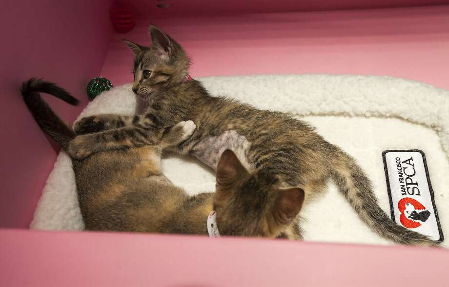 Heres How The Spca Brings Its Puppies And Kittens To Sfs Macys