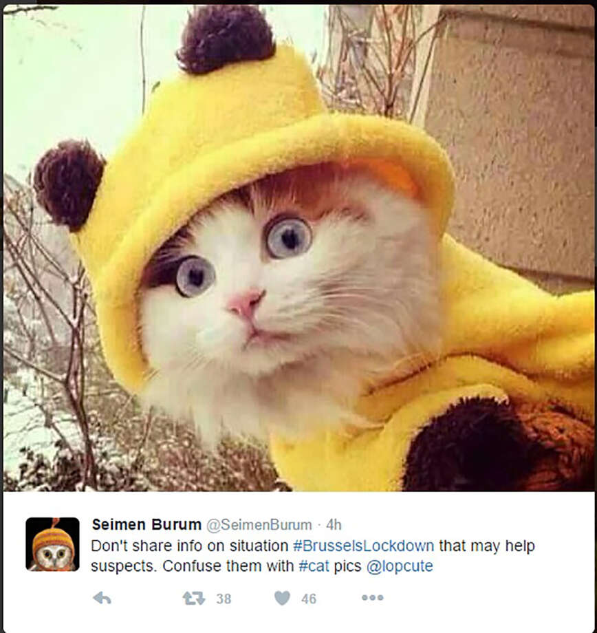 """Don't share info on situation #BrusselsLockdown that may help suspects. Confuse them with #cat pics"" Photo: Twitter Screen Grabs"