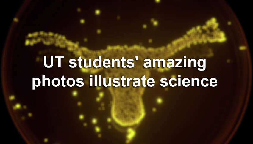 Click through the slideshow to see some of the amazing photo submissions by UT students.