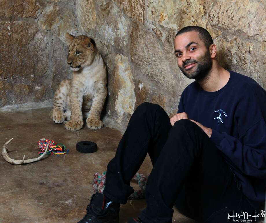 Tony Parker knows a thing or two about being part of a trio, so it's fitting that he would name the San Antonio Zoo's three lion cubs. Photo: Provided By His-N-Her Photography