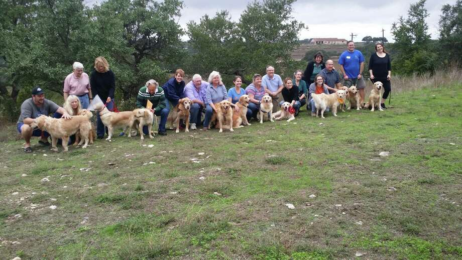 Austin-based Gold Ribbon Rescue brought these retrievers from Turkey to the United States as part of their project, Operation Home. Photo: Provided By Gold Ribbon Rescue