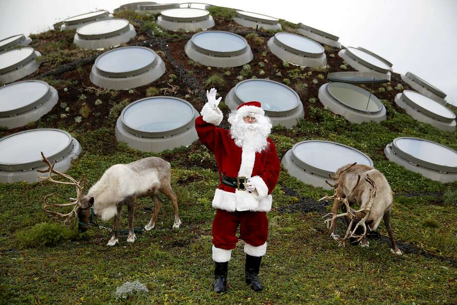 Santa Claus waves while flanked by reindeer Frosty (left) and Holiday on the roof of the California Academy of Sciences in San Francisco, California, on Tuesday, Nov. 24, 2015. Photo: Connor Radnovich, The Chronicle