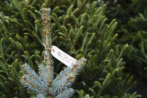 How to buy a Christmas tree in 7 easy steps - Photo