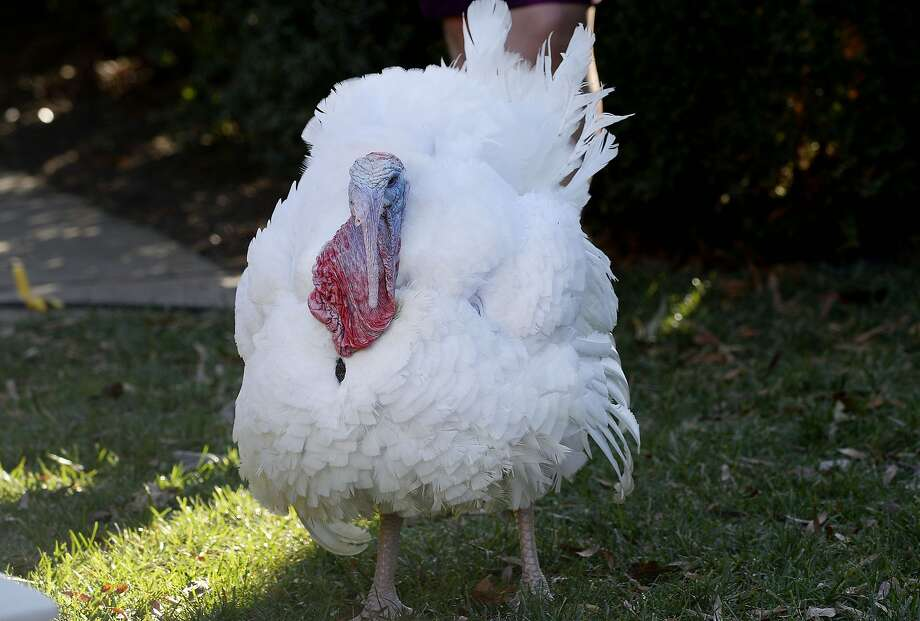 Transit services have altered schedules on Thanksgiving. Photo: Olivier Douliery, McClatchy-Tribune News Service