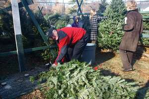 Christmas tree sales return to Greenwich church - Photo