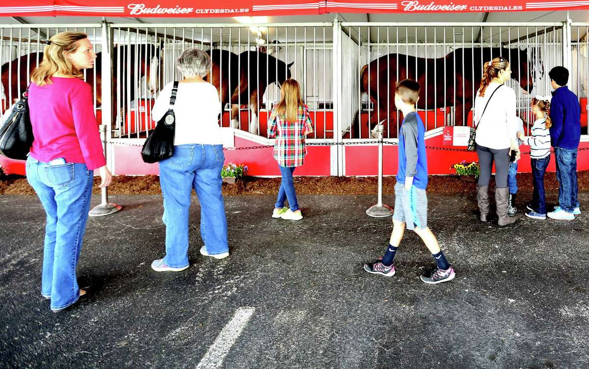 Viewers take advantage of being able to view the Budweiser Clydesdales at the Anheuser-Busch Houston Brewery before this year's Thanksgiving Day parade on Wednesday, Nov. 25, 2015, in Houston.