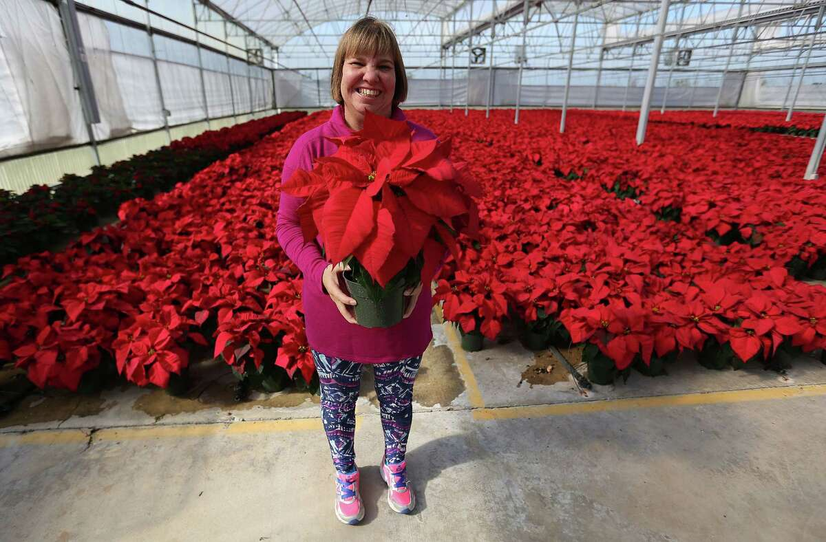 Brookwood Citizen Carrie, holds a poinsettia in the greenhouse at the horticulture area at Brookwood, a community of adults with special needs on Tuesday, Nov. 24, 2015, in Brookshire in in Waller County, Texas.
