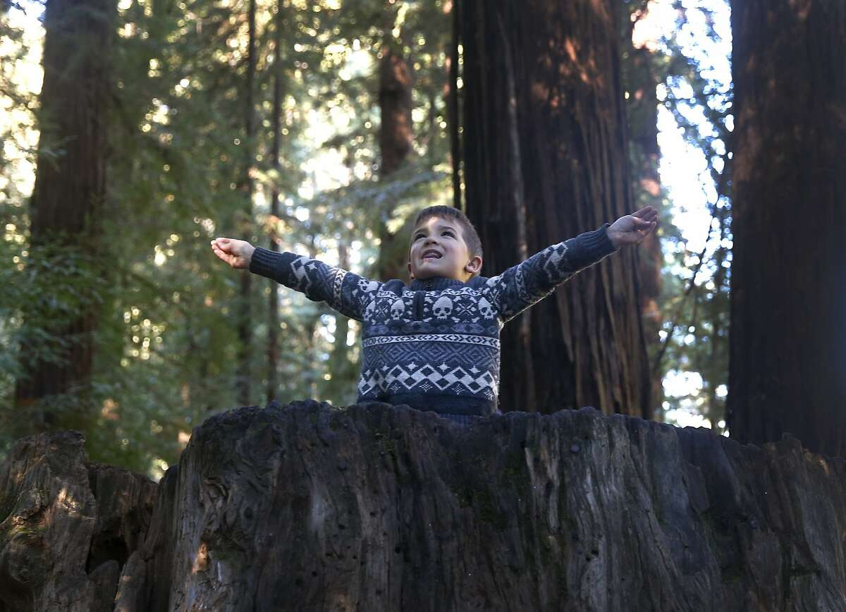 Four-year-old Asher Gottlieb emerges from the top of an old redwood stump at Samuel P. Taylor State Park in Lagunitas, Calif. on Friday, Nov. 27, 2015. Asher's family attempted to take advantage of free admission to the park, but all of the free passes were already gone. The Save the Redwoods League provided a limited number of free passes to selected state parks as an alternative to shopping on Black Friday.