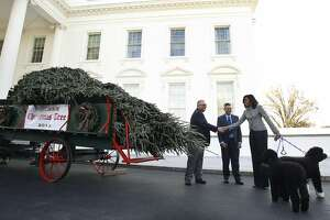 White House Christmas tree arrives - Photo