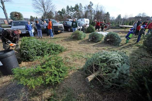 Holiday trees fresh cut and readied at McDonough's Farm on Friday Nov. 27, 2015 in East Greenbush N.Y. (Michael P. Farrell/Times Union) Photo: Michael P. Farrell / 10034339A