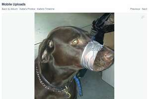 Florida woman at center of online shaming firestorm for photo of dog with duct tape around mouth - Photo