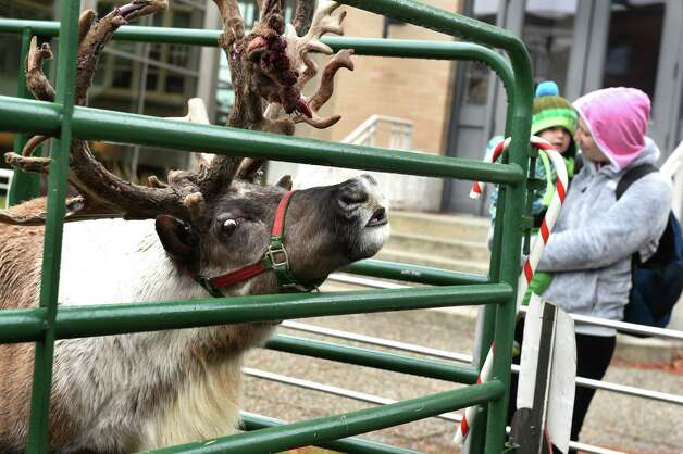 Buddy, a 5-year-old reindeer, smells something on the wind during Home for the Holidays free admission weekend on Saturday, Nov. 28, 2015, at Albany Institute of History and Art in Albany, N.Y. Buddy was part of the activities for families, which included making holiday cards and a visit with Santa. The event continues, sans reindeer, on Sunday from noon to 4:30 p.m. (Cindy Schultz / Times Union) Photo: Cindy Schultz / 10034425A