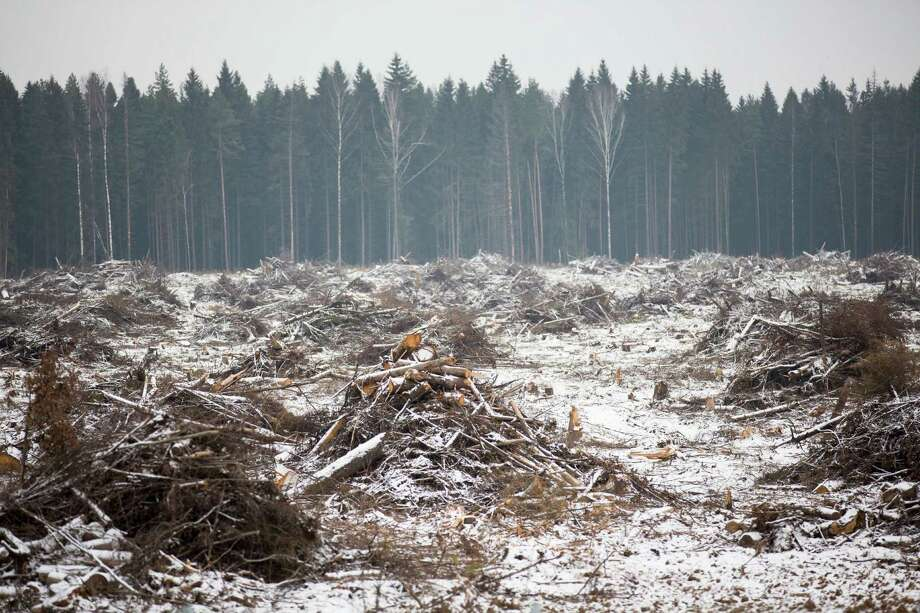 Trees are cut along a construction site of a new highway in Moscow region in this Tuesday, Nov. 17, 2015 photo. As the climate warms, moisture levels are changing with wet areas becoming wetter and dry areas drier. Russia is the fastest warming part of the world, according to a report from the country�s weather monitoring agency. The steady rise in temperatures puts Siberia- known for its long winters and lush forests- at risk to natural disasters, such forest fires. Photo: Alexander Zemlianichenko, AP / AP