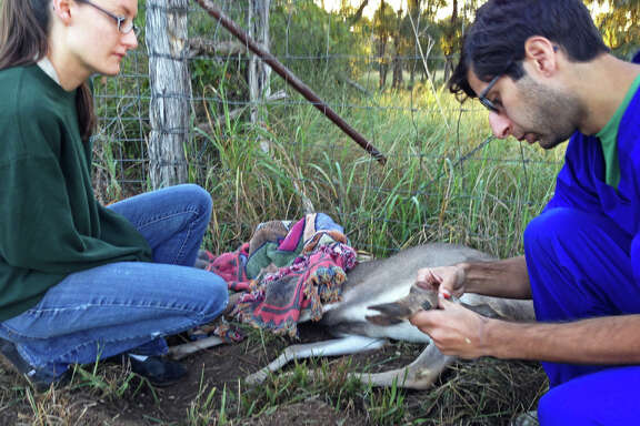 Wildlife Rescue & Rehabilitation is one of the local charities accredited by the Better Business Bureau's Wise Giving Alliance. Dr. Ankur Gupta (right), a veterinarian with the wildlife rescue group, examined an injured buck's leg earlier this year after the animal became caught in a fence. The rescue's hospital coordinator, Ashley Kees (left) was on her way to work and stopped to free the deer.