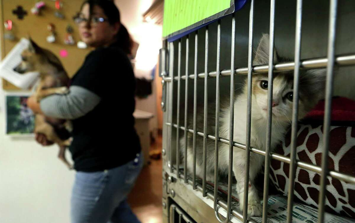 The Animal Defense League of Texas appreciates volunteers who can help care for the dogs and cats in their facilities.