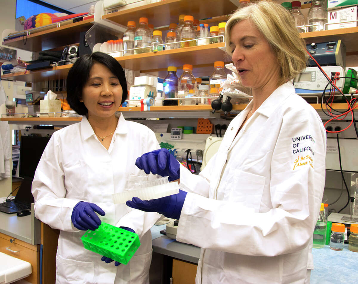 Jennifer Doudna (right), the UC Berkeley biologist who pio neered gene editing, works in her lab with Kai Hong in 2014.