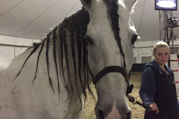Horse with braided mane; ready for dinner and bed