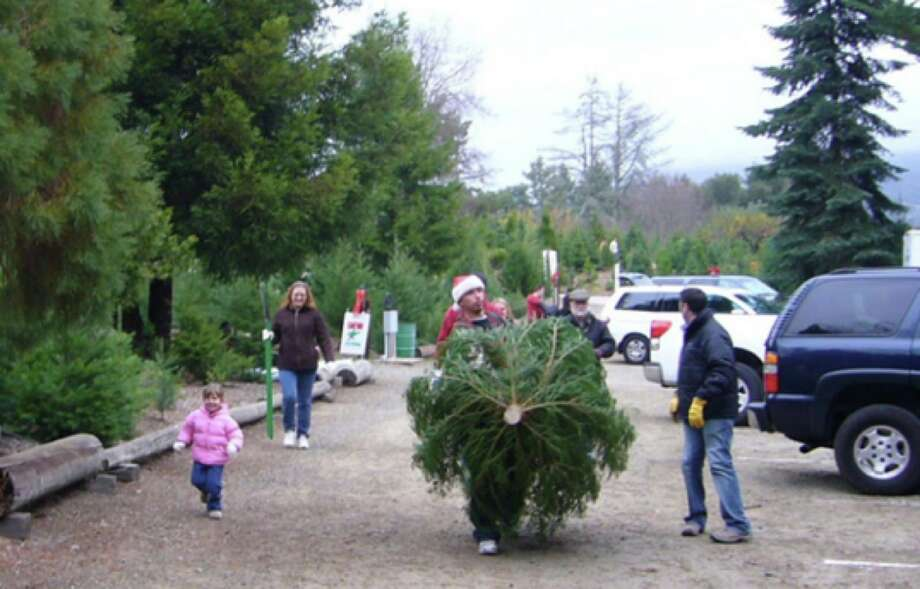 Patchen California Christmas Tree Farms in the Santa Cruz Mountains, 90 percent of the seedlings died in 2015 due to the California drought. Photo: Courtesy Patchen Christmas Tree Farms